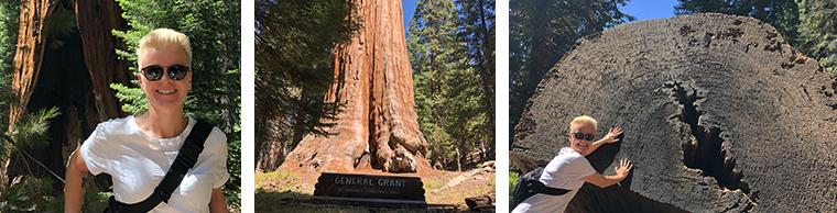 sequoia-2018